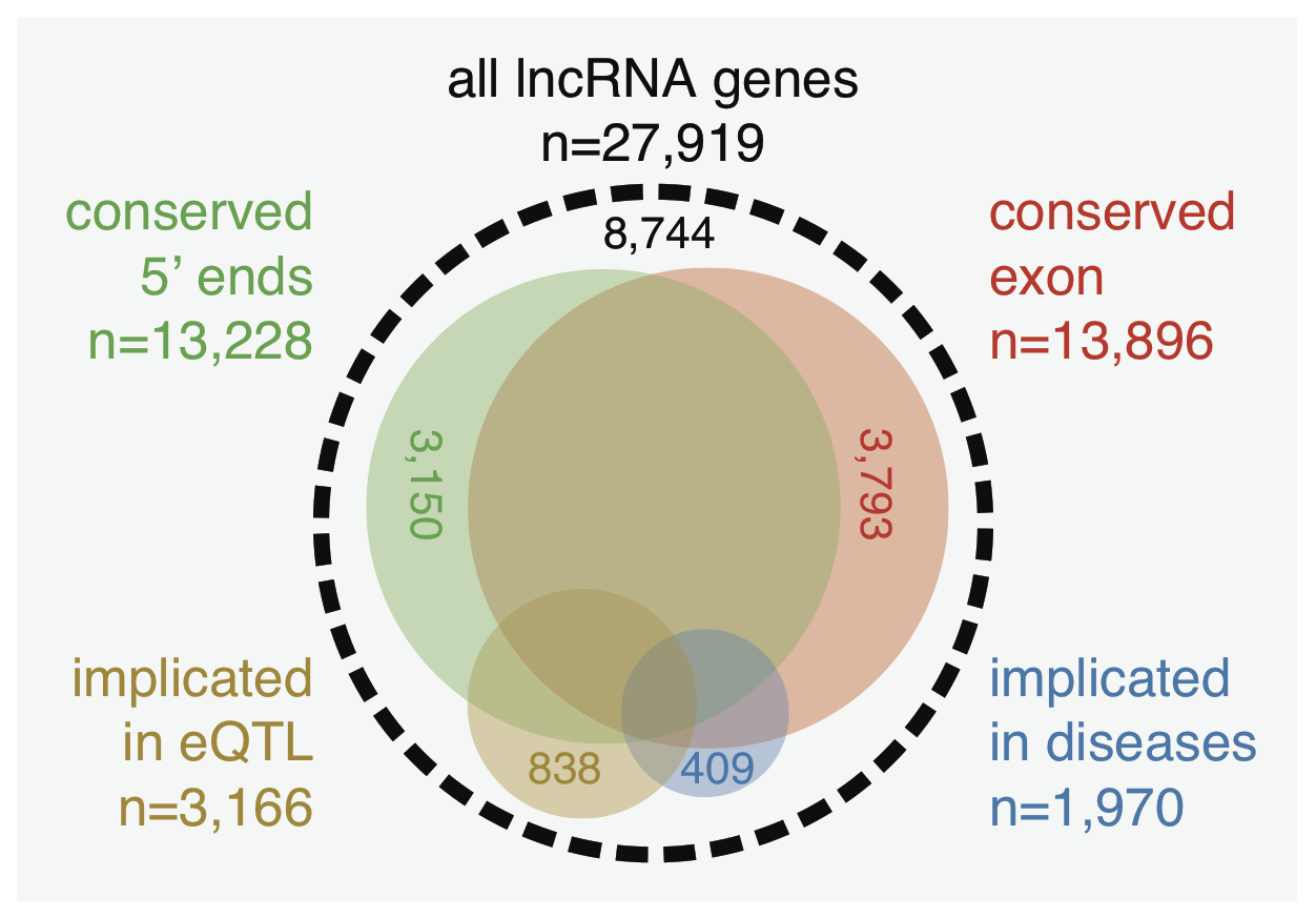 A figure of the FANTOM5 long non-coding RNA paper